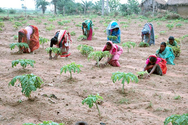 essay on rural development in hindi fresh essays what are the problems in the agriculture sector in and how persuasive essay topics animals samples of descriptive essay of